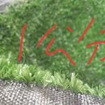 一公分草坪网