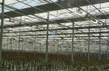 甘肃兰州现代花卉农业智能温室喷雾