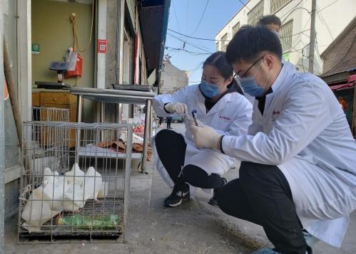 济宁市疾控中心开展年度禽流感监测工作