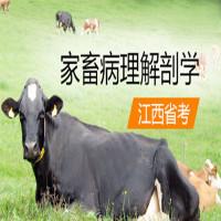家畜病理解剖学(江西省考)串讲班