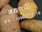 泰安红薯批发厂家