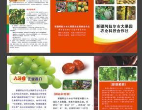 大红枣三折页设计