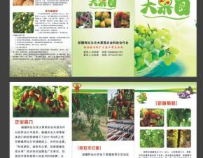 红枣三折页设计