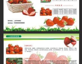 草莓园单页设计