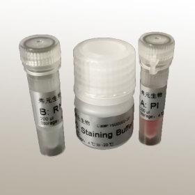 Annexin V-FITC/PI 双染细胞凋亡检测试剂盒