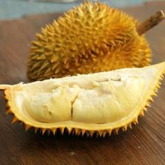 果郡王 泰國金枕頭新鮮榴蓮1個 單果5~7斤 進口新鮮水果 2.5~3.5kg