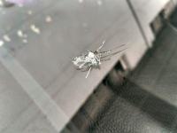 宝马汽车玻璃放射状大裂缝修补效果图