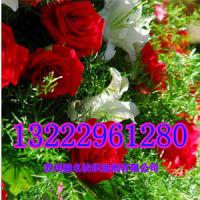 薰衣草、玫瑰香、柠檬香、茉莉香、菊花、芦荟、薄荷、艾草香味整理剂