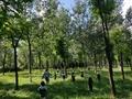 我们把北欧的森林带回来了 | 溪谷森林自然教育国际工作坊报名开启