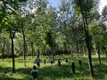 我��把北�W的森林�Щ�砹� | 溪谷森林自然教育���H工作坊�竺��_��
