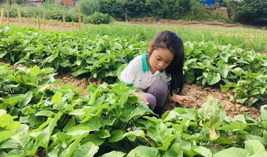 南京博苑小农场采摘的孩子