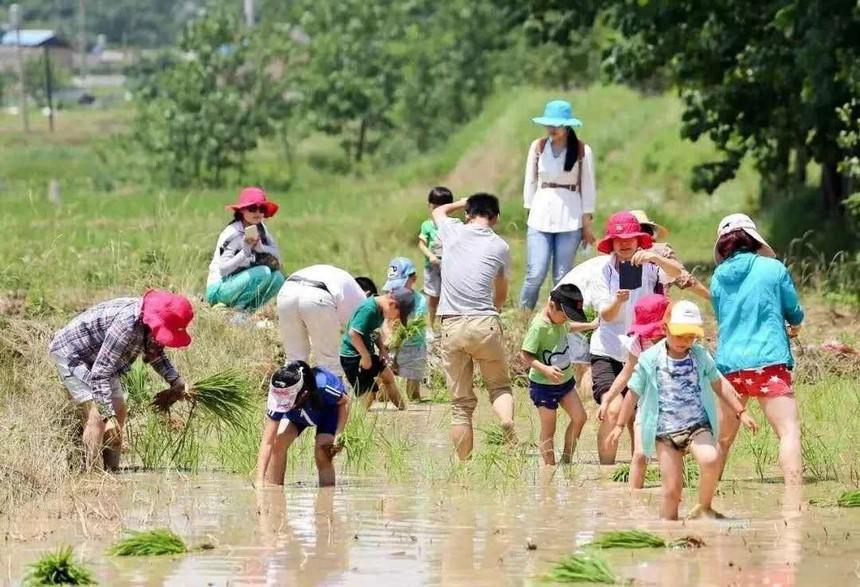 南京博苑小农场亲子插秧活动