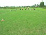 草坪养殖专用砂