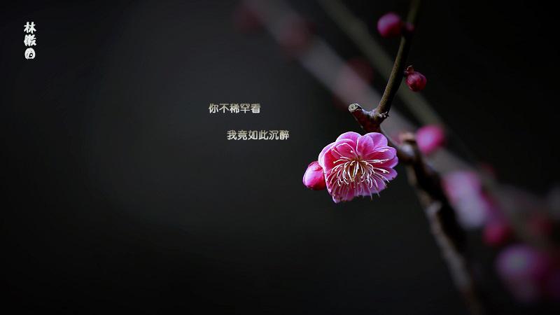 林徽因:蛛丝和梅花