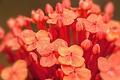 学钢琴丨钢琴曲《花儿为什么这样红》