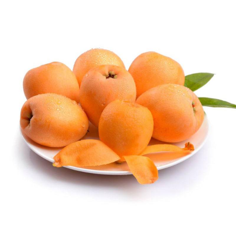 苏州新鲜枇杷大果5斤净重当季应季东山枇杷水果现摘现发