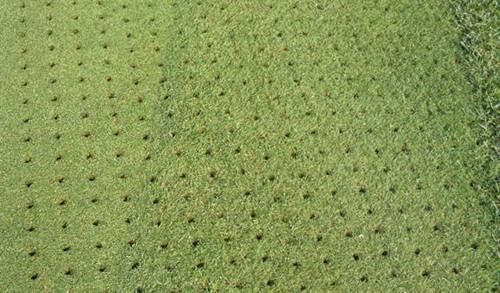 冬季草皮的养护2.jpeg
