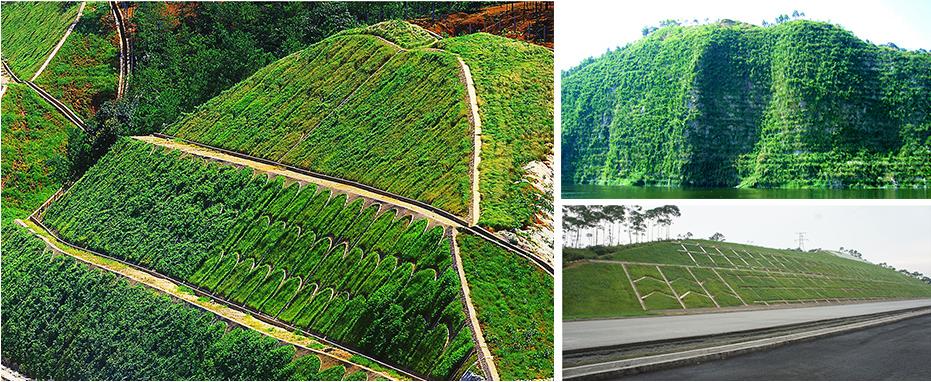 邊坡生態綠化