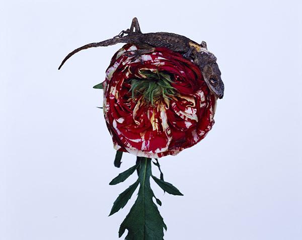 """图8 """"花与JAMORINSKY""""系列  c-print 75*60cm.jpg"""