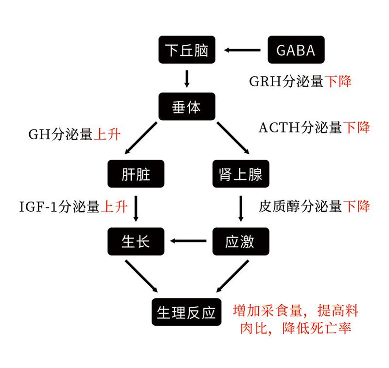γ氨基丁酸-2-2.jpg