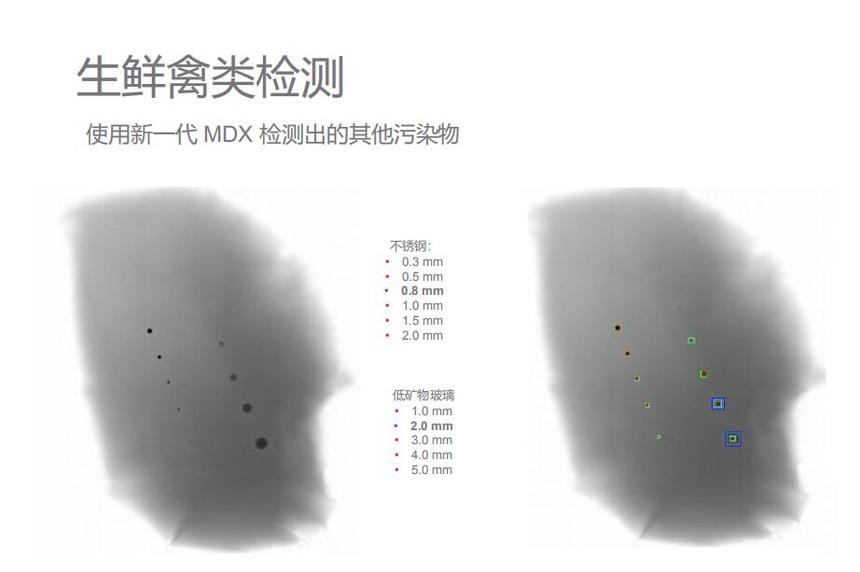 生禽类检测7.jpg