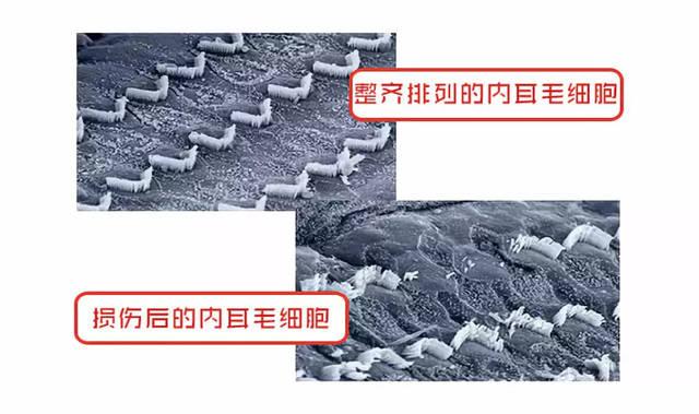 src=http_%2F%2F5b0988e595225.cdn.sohucs.com%2Fq_70,c_zoom,w_640%2Fimages%2F20181016%2F663df329484144aa8d2e0b20d6f7e13a.jpg&refer=http_%2F%2F5b0988e595225.cdn.sohucs.jpg