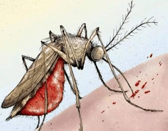 蚊子入秋-11.jpg