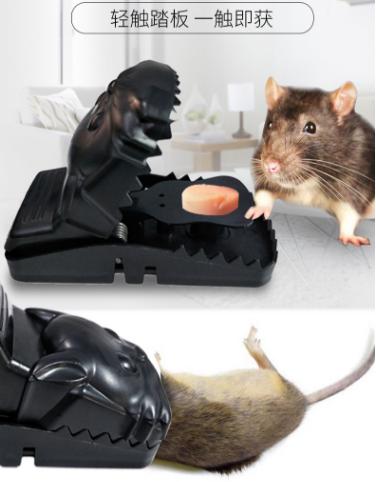 鼠疫-7.png