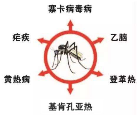 蚊子-疾病.jpg