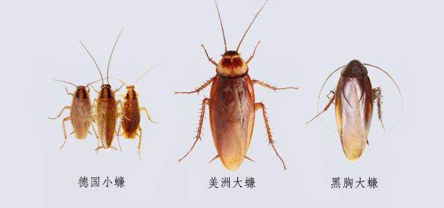 蟑螂1.jpg