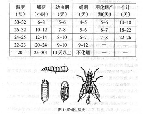 苍蝇-进化温度.jpg