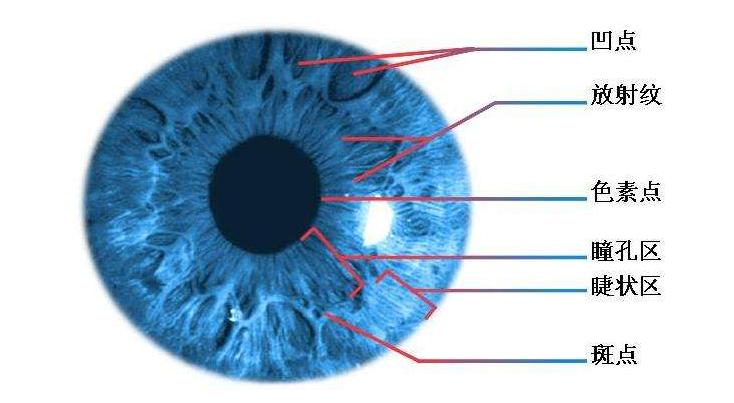 视力健康,视力加盟.png