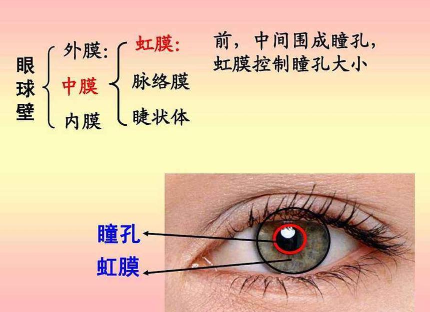 视力矫正,视力加盟.png
