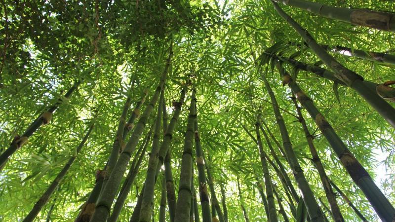 Expleo推出了用于航空和太空行业的竹纤维生物来源复合材料.jpg