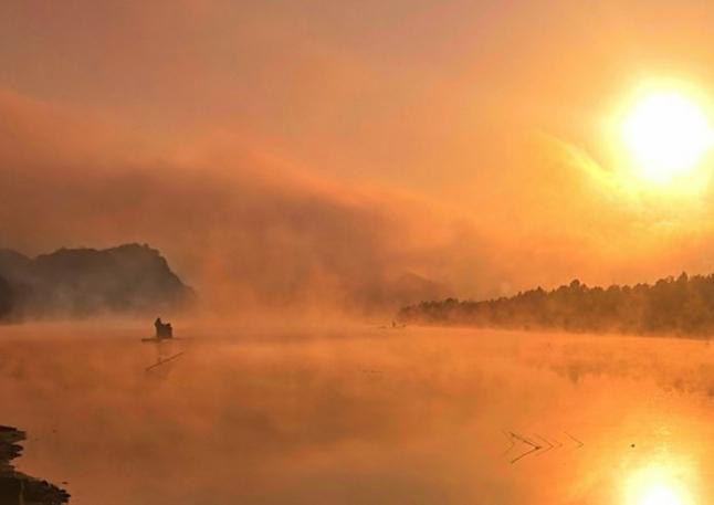 冬日红杉林 晨雾缭绕美如画