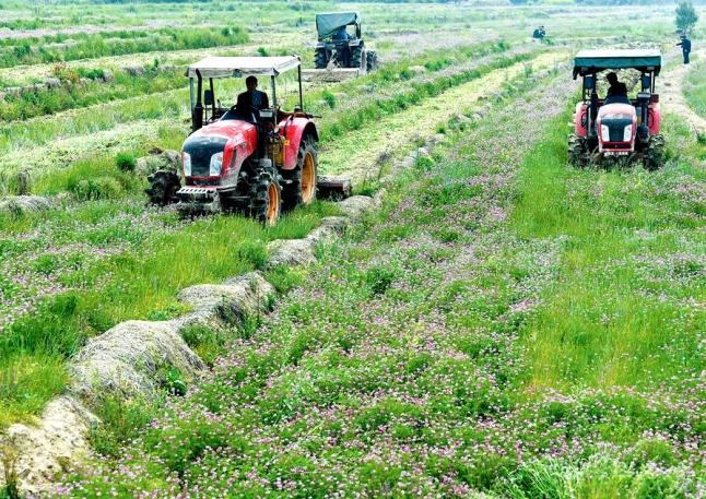冬种紫云英稻田有底肥