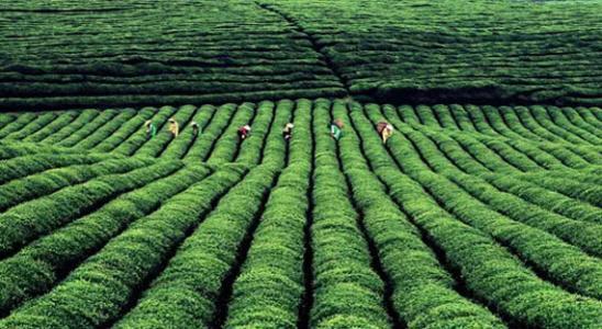 贵州茶叶库