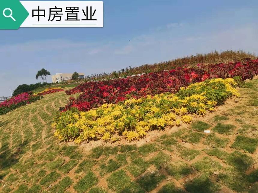 沙井公园.jpg
