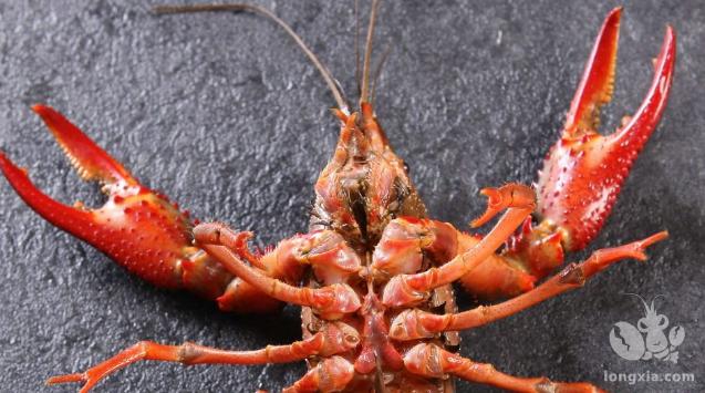 小龙虾养殖池塘越大越好吗?