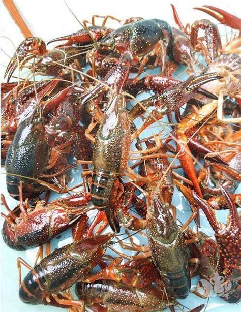 分析首次养虾三分之一亏本的原因