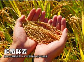 粮食安全:跳出农业说发展