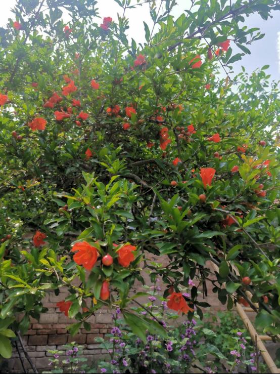父母的庭院(1)8.png