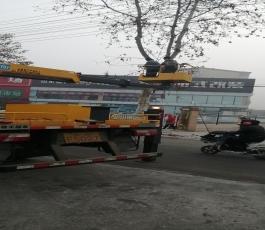 路灯车在市中区飞跃大道修理树枝