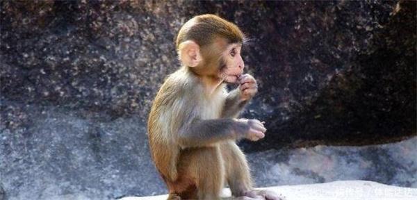 小猴吃瓜子.jpg