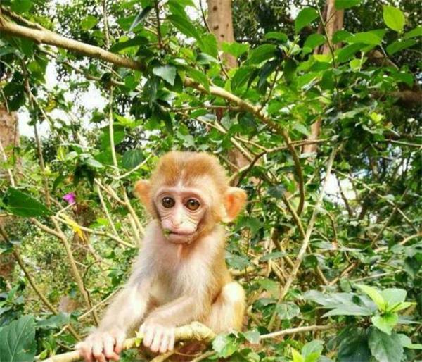 小猴.jpg