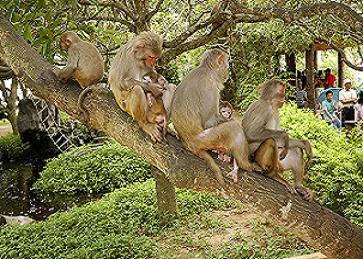 猴子们在休息.jpg