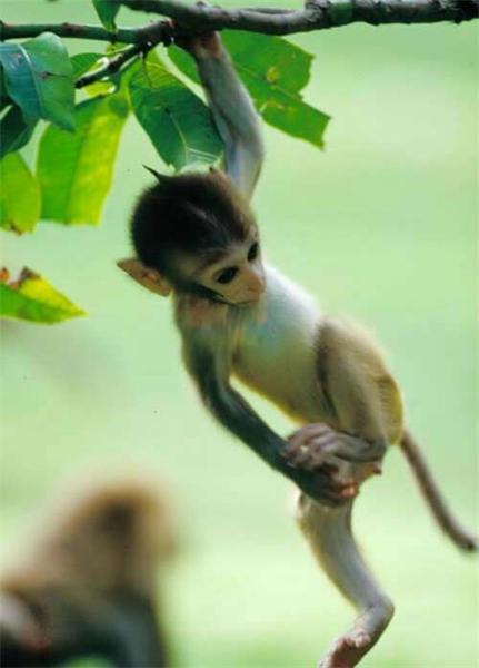 吊在树上.jpg