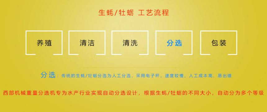 行业新闻-生蚝插图.png