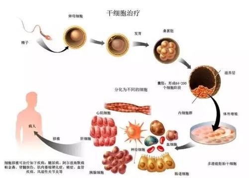 新生儿干细胞储存