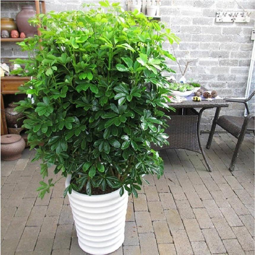 杭州植物租赁公司